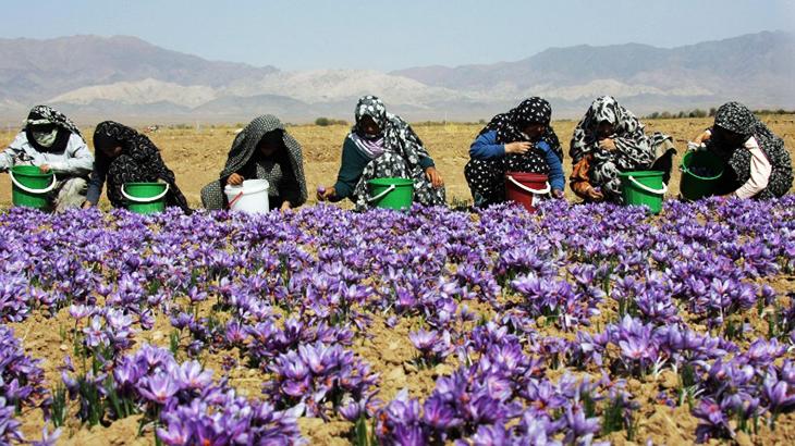 Nhụy hoa nghệ tây Saffron Badiee chính hãng HT Market